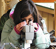Young girl looks into a microscope